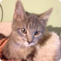 Adopt A Pet :: Wrangler - Bridgeton, MO