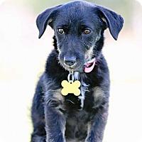 Adopt A Pet :: Tam tam - Salt Lake City, UT