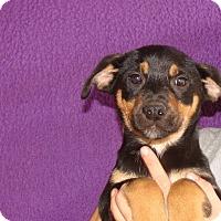 Adopt A Pet :: Tawney - Oviedo, FL