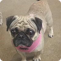 Adopt A Pet :: Annie - Gardena, CA