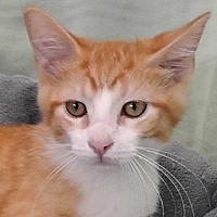 Adopt A Pet :: Finnigan - Redondo Beach, CA