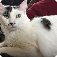 Adopt A Pet :: Andy - Toms River, NJ