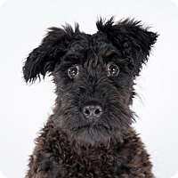 Adopt A Pet :: Ben - St. Louis Park, MN
