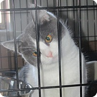 Adopt A Pet :: Congo - Germantown, MD