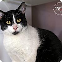 Adopt A Pet :: Mars - Lyons, NY