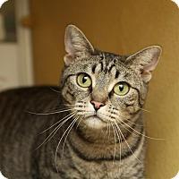 Adopt A Pet :: Ivana - Albany, NY