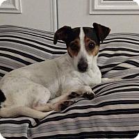 Adopt A Pet :: Alexa - Gainesville, FL