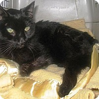 Adopt A Pet :: Ebony - Quincy, MA