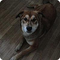 Adopt A Pet :: Leila - Montreal, QC