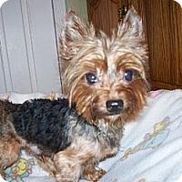 Adopt A Pet :: Dandy - Freemont, CA