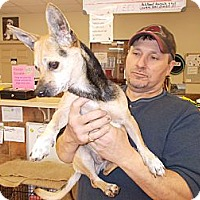 Adopt A Pet :: Jo Jo - Heber Springs, AR