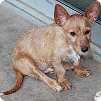 Adopt A Pet :: Leo - Norwalk, CT