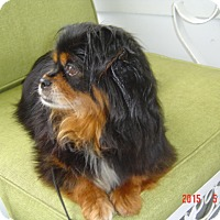 Adopt A Pet :: Elle 3yr Adopted - Mentor, OH