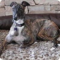Adopt A Pet :: Tessie - Tucson, AZ