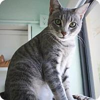 Adopt A Pet :: Aphrodite - Bradenton, FL