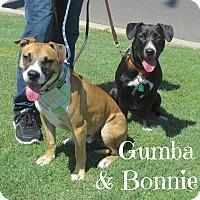 Adopt A Pet :: Bonnie and Gumba - Scottsdale, AZ