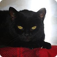Adopt A Pet :: Slinky - Webster, MA