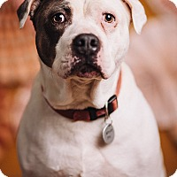 Adopt A Pet :: DeeOhGee - Portland, OR