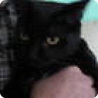 Adopt A Pet :: Sheba - Charlotte, NC