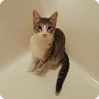 Adopt A Pet :: Aladdin - Orange City, FL
