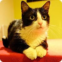 Adopt A Pet :: Heidi - Brooklyn, NY