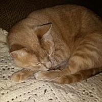 Adopt A Pet :: Bopper - Sacramento, CA