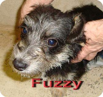 Terrier (Unknown Type, Medium) Mix Dog for adoption in Coleman, Texas - Fuzzy