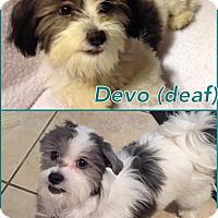 Adopt A Pet :: Devo - Homestead, FL