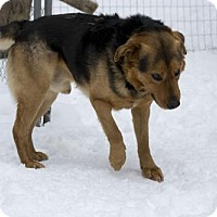Adopt A Pet :: Duke - Clinton, ON