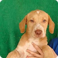 Adopt A Pet :: Anna - Oviedo, FL