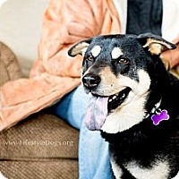 Adopt A Pet :: Bear - Youngstown, OH