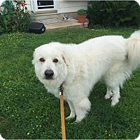 Adopt A Pet :: Samson - Kyle, TX