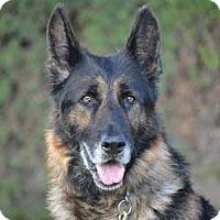 Adopt A Pet :: Ben - Downey, CA