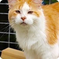 Adopt A Pet :: Joey - San Antonio, TX