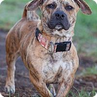 Adopt A Pet :: Kenny - San Diego, CA