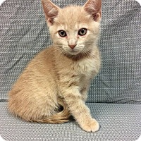 Adopt A Pet :: Lock - Moody, AL
