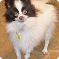 Adopt A Pet :: Cheeks - Prole, IA