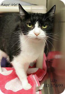 Domestic Shorthair Cat for adoption in Camden, Delaware - Izzy