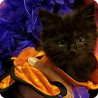 Adopt A Pet :: Rajah - Lexington, KY