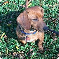 Adopt A Pet :: Adoption pending - Rusty2 - Orangeburg, SC