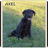 Adopt A Pet :: Axel - Milford, NJ