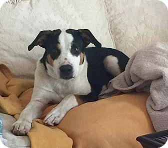 Hound (Unknown Type) Mix Dog for adoption in Hopkinton, Massachusetts - Finley