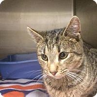 Adopt A Pet :: Corey - Beckley, WV