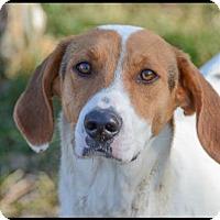 Adopt A Pet :: Brianna - Brick, NJ