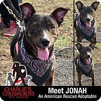 Adopt A Pet :: Jonah - Spring City, PA