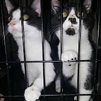 Adopt A Pet :: Jimmy Carter - Albemarle, NC