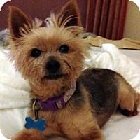 Adopt A Pet :: Cappy - Miami, FL