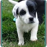Adopt A Pet :: Fancy - Staunton, VA