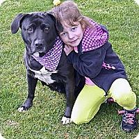 Adopt A Pet :: Jackie Urgent HELP - Sacramento, CA