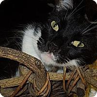 Adopt A Pet :: Buster - Medina, OH